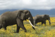 Support the World's Biggest Elephant Cake at the 2017 Good Food & Wine Show